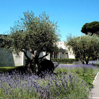 Musée Chagall : Visites accompagnées