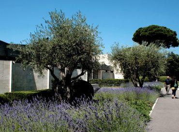 Musée Chagall : Parcours numérique